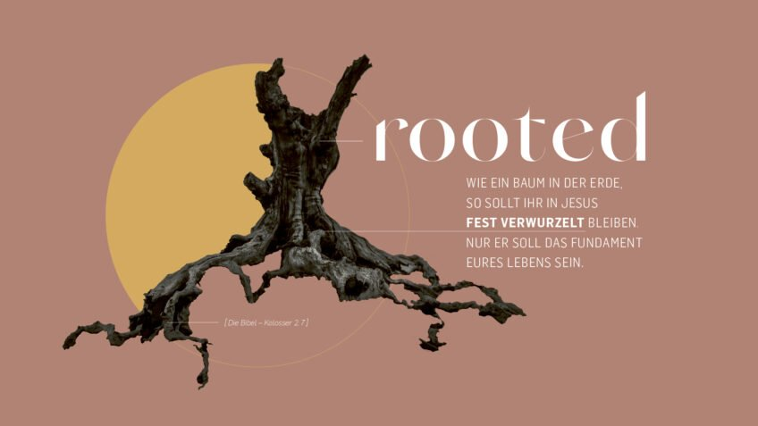 Rooted – Summer Celebrations